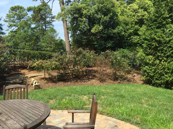Myers Park Backyard Before