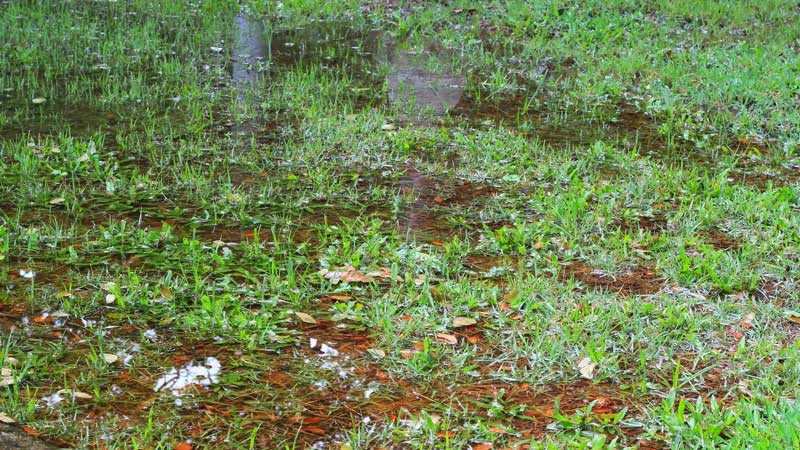 large puddles in the yard of a home with poor drainage
